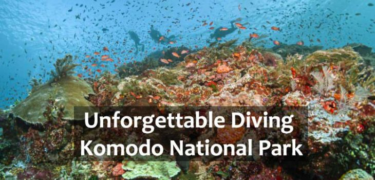 diving-komodo